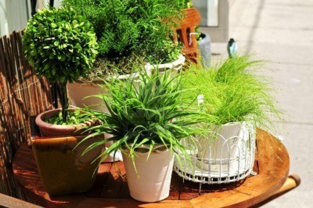 plantes-vertes-en-pots