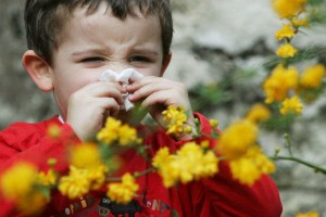 Les différents pollens